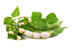 Green beans in pod. Green edamame soy beans in pod on white background stock images