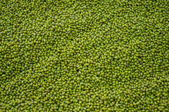 Green beans seed breeders or are ready to expand into the produc Royalty Free Stock Photos