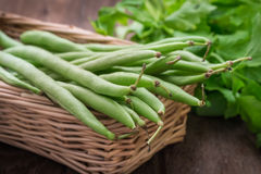 Green beans in wicker basket Stock Images