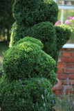Green bear topiary Royalty Free Stock Photo