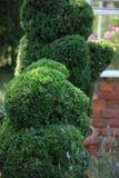 Green bear topiary Royalty Free Stock Photo