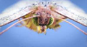 Green beautiful butterfly super macro Stock Photo