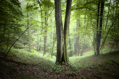 Green beautiful forest in summer Stock Images