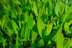 Green grass. Abstract, purity. Green beautiful grass. Abstract, purity Stock Images