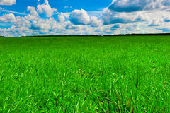Green beautiful lawn and nice sunny weather Royalty Free Stock Photos