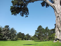 Green beautiful park and blue sky Royalty Free Stock Images