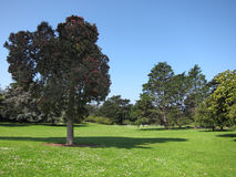 Green beautiful park and blue sky Royalty Free Stock Photo