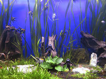 A green beautiful planted tropical freshwater aquarium Stock Photo
