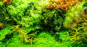 Green beautiful planted tropical freshwater aquarium with fishes Royalty Free Stock Photography