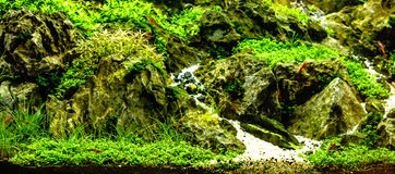 Green beautiful planted tropical freshwater aquarium with red sh Royalty Free Stock Image