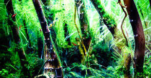 Green beautiful planted tropical freshwater aquarium with small Stock Photo