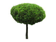 Green beautiful and roundl tree isolated Stock Images