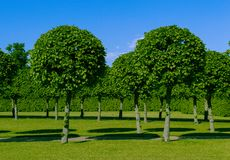 Green beautiful trees of the Palace Royalty Free Stock Image