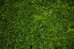 Green beautiful wallpaper Royalty Free Stock Photos