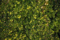 Green beautiful wallpaper Stock Images