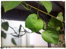 Green beauty Royalty Free Stock Photo