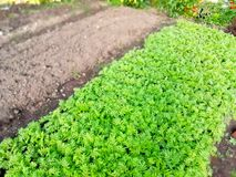 green bed in the garden