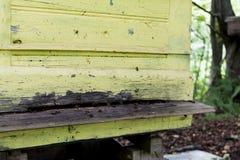 Green bee house Stock Photo