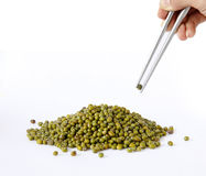 Green beens Stock Images