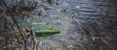 Green beer bottle in the pond. The concept of environmental pollution.  stock photography