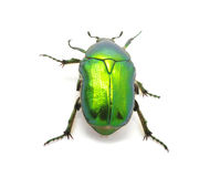 Green beetle Stock Photography