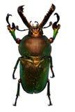 Green beetle Stock Photo