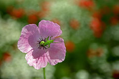 Flower with beetle Stock Photography