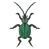 Green beetle. vector illustration. Drawing by hand. Green beetle. vector illustration. Drawing by hand Royalty Free Stock Photo