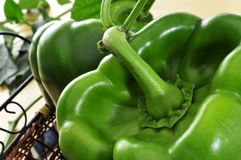 Green bell peppers Royalty Free Stock Photo