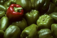 Green Bell peppers with One Red Bell pepper Stock Images