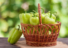 Green bell peppers in a wicker basket on  wooden table with  blurred background. Green bell peppers in a wicker basket on a wooden table with a blurred Royalty Free Stock Image