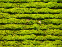 Green belts. Detail of a roof slab covered with moss Stock Photography