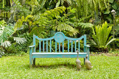 Green bench in the garden Royalty Free Stock Photography