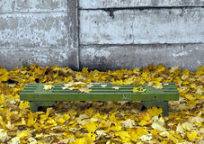 Green bench and orange leaves. Stock Photos