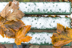Green bench with snow and autumn leafs Royalty Free Stock Image
