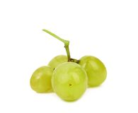 Green berry of grape. Royalty Free Stock Images