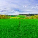 green betar Arkivfoton