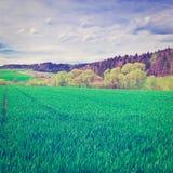 green betar Arkivbild