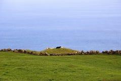 Green betar av Pico, Azores Arkivfoto