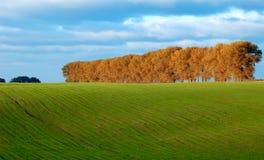 green betar trees Arkivfoto