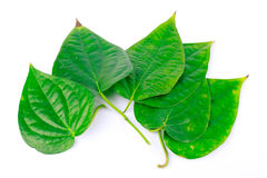 Green betel leaf is herbal Royalty Free Stock Images