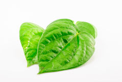 Green betel leaf Royalty Free Stock Photos
