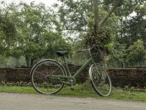 Green bicycle parked next to a tree in the garden Stock Images