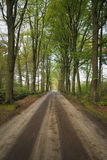 Green big oaks standing alongside dirt sand road in forest landscape Royalty Free Stock Photos