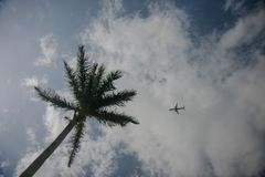Green palm and small plane on the blue sky with clouds royalty free stock images