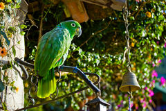 Green big parrot Stock Photo
