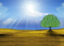 Green big tree in yellow field Stock Photography