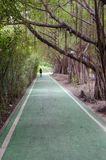Green bike lane in the park. Natural green and calm bike lane in the park around with many tree stock photography