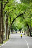Green bike lane in the park. Natural green and calm bike lane in the park around with many tree stock image