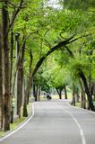 Green bike lane in the park. Natural green and calm bike lane in the park around with many tree royalty free stock photos